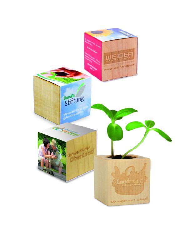 Plant Wood