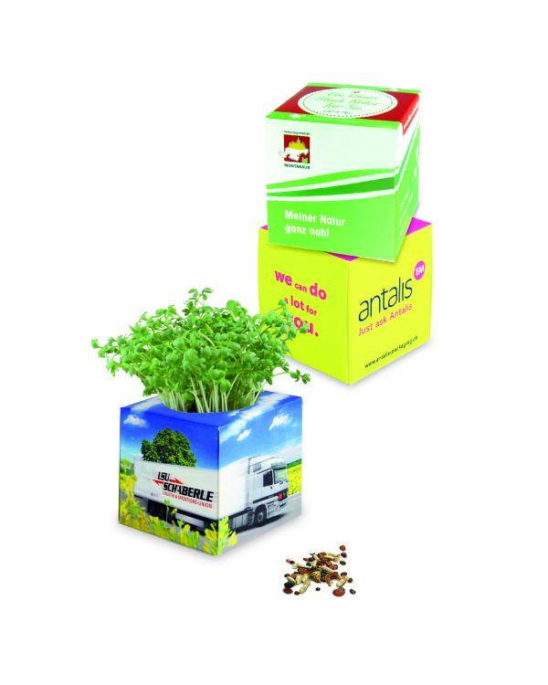 Plant Cube